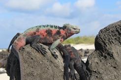 Galapagos National Park, Ecuador