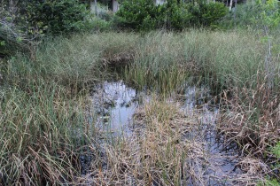 Wetlands in Florida