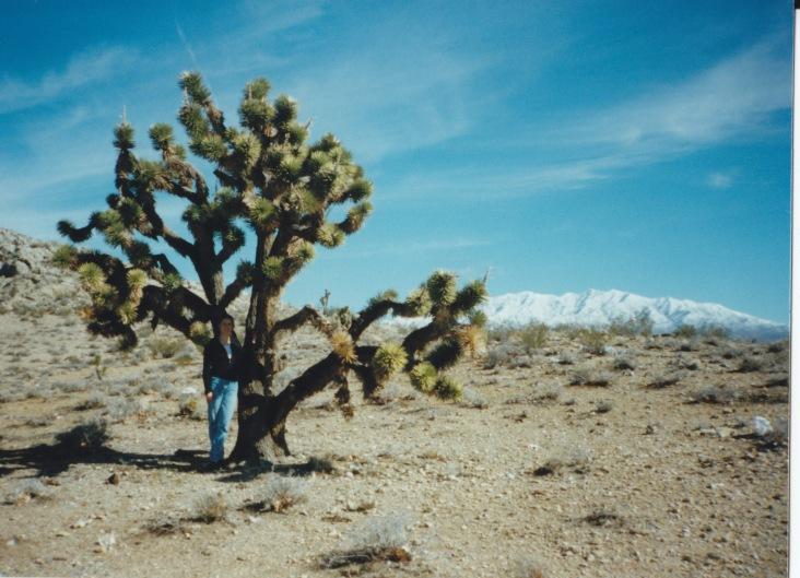 Joshua Tree, Mojave Desert, USA