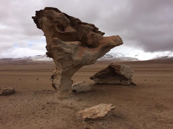 Rock Tree, Bolivia
