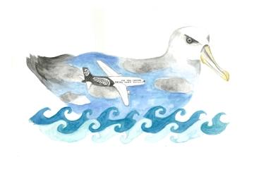 Albatross, watercolour