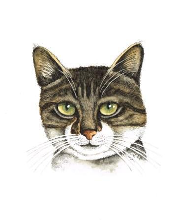 Cat, watercolour & ink