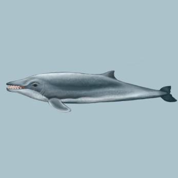 Ancient whale, digital