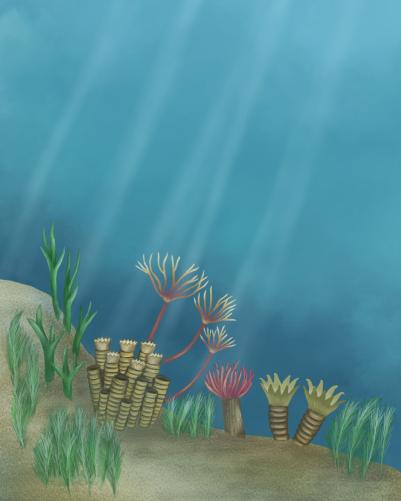 Coral, digital