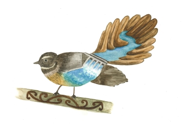 Fantail, watercolour