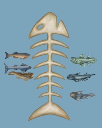Fish evolution, digital