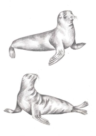 Seals, graphite