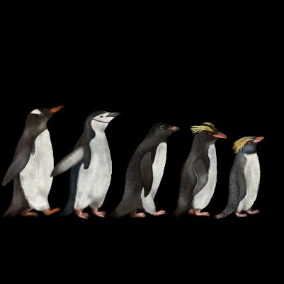 Antarctic penguins, digital