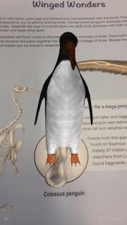 Colossus penguin augmented