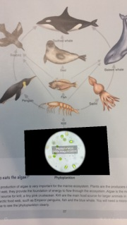 Phytoplankton film augmented