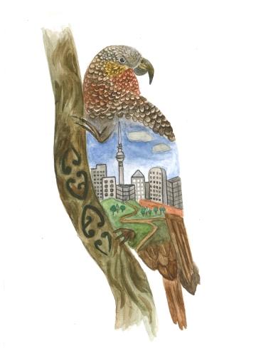 Kaka, watercolour