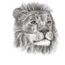 Lion in pen and ink
