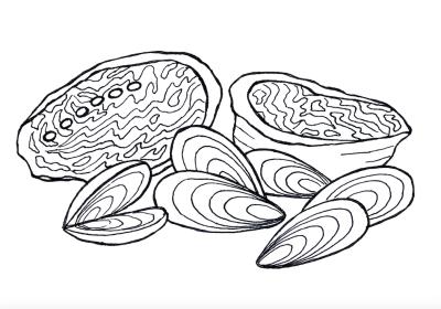 Mussels, pen & ink