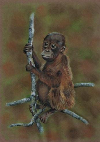 Orangutan, acrylic