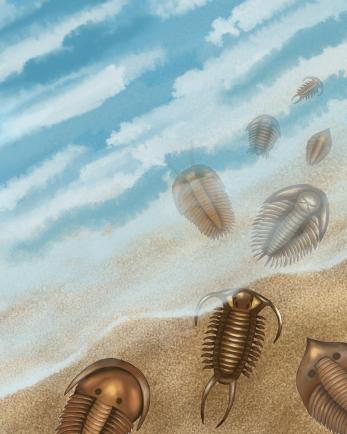 Trilobites, digital
